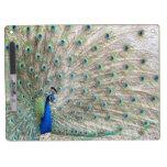 Peacock Bird Dry Erase Board