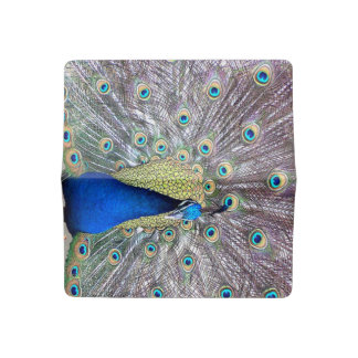 Peacock Bird Feathers Animal Checkbook Cover