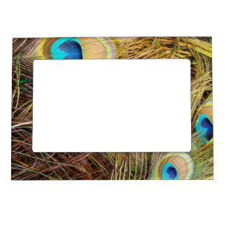 Peacock Bird Feathers Magnetic Frame
