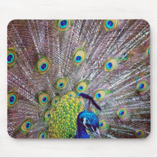 Peacock bird feathers mouse pad