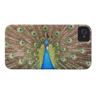 Peacock bird feathers photo blackberry bold case