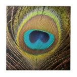 Peacock Bird Feathers Tile