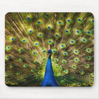 Peacock bird mouse pad