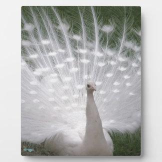 Peacock Bird Peace Love Animals Nature Destiny Display Plaques