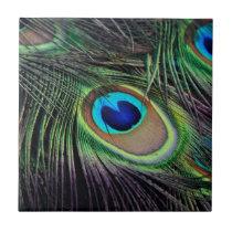 Peacock Bird Peafowl Tile