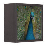 Peacock Bird Premium Keepsake Box