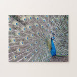 Peacock Bird Puzzle