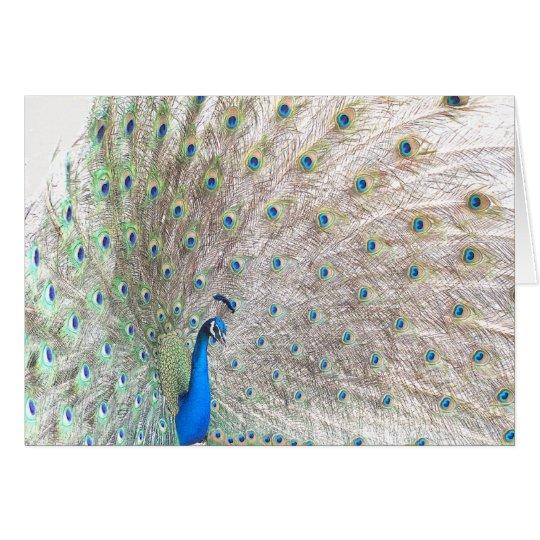 Peacock Bird Wildlife Animal Feathers Card