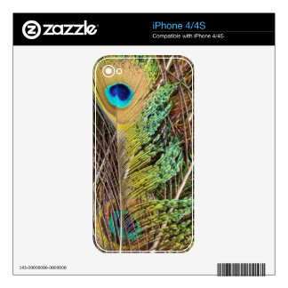 Peacock Bird Wildlife Animal Feathers Decals For The iPhone 4S