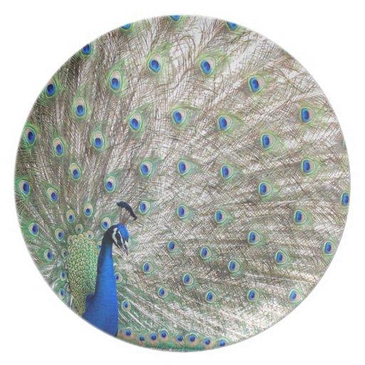 Peacock Bird Wildlife Animal Feathers Dinner Plate