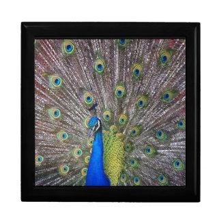 Peacock Bird Wildlife Animal Feathers Gift Box