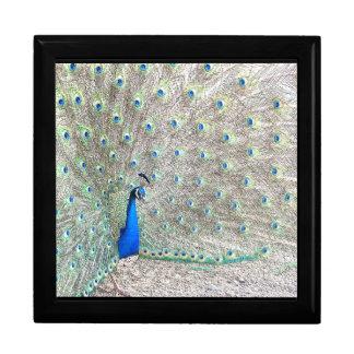 Peacock Bird Wildlife Animal Feathers Keepsake Box