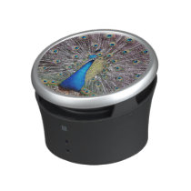 Peacock Bird Wildlife Animals Feathers Speaker