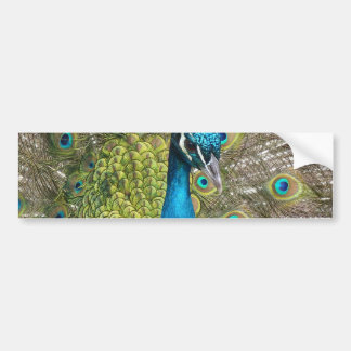Peacock bird with beautiful feathers bumper sticker