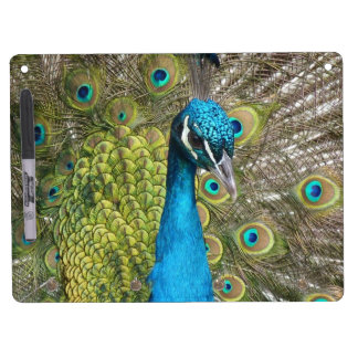 Peacock bird with beautiful feathers Dry-Erase whiteboards