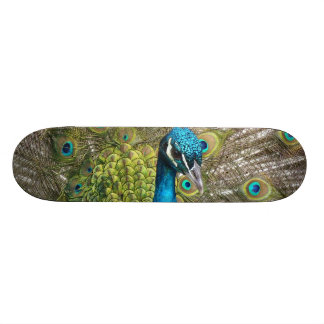 Peacock bird with beautiful feathers skateboards