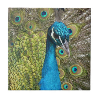 Peacock bird with beautiful feathers small square tile