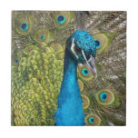 Peacock bird with beautiful feathers tile