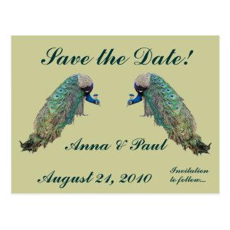 Peacock Birds Save the Date Postcard