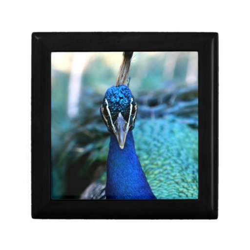 Peacock blue head on image gift boxes
