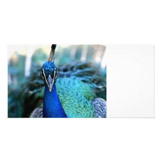 Peacock blue head on image photo card