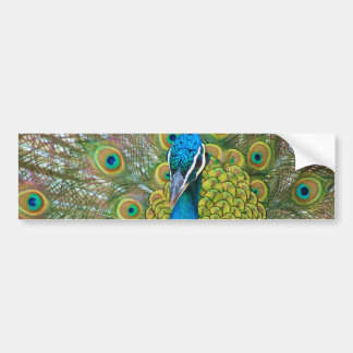 Peacock Blue Head with and Colorful Tail Feathers Bumper Sticker