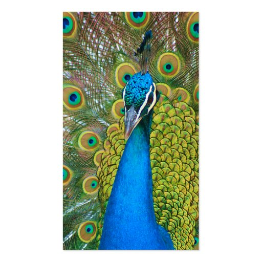 Peacock Blue Head with and Colorful Tail Feathers Business Card