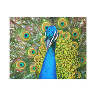 Peacock Blue Head with and Colorful Tail Feathers Canvas Print
