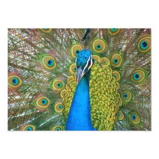 Peacock Blue Head with and Colorful Tail Feathers Card