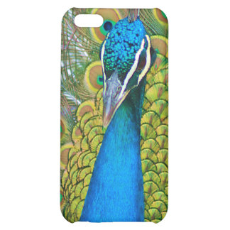 Peacock Blue Head with and Colorful Tail Feathers iPhone 5C Cover