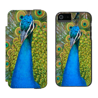 Peacock Blue Head with and Colorful Tail Feathers iPhone SE/5/5s Wallet Case