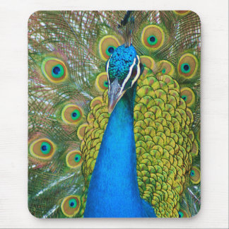 Peacock Blue Head with and Colorful Tail Feathers Mouse Pad