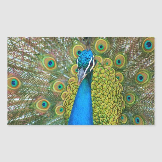 Peacock Blue Head with and Colorful Tail Feathers Rectangular Sticker