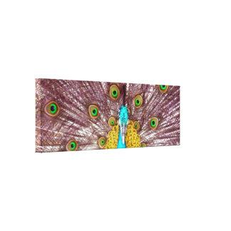 peacock bright canvas