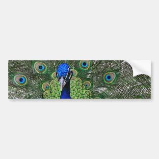 Peacock Bumper Stickers