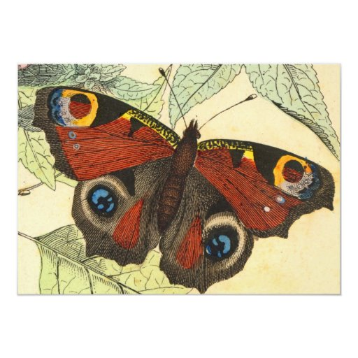 Peacock Butterfly 5x7 Paper Invitation Card