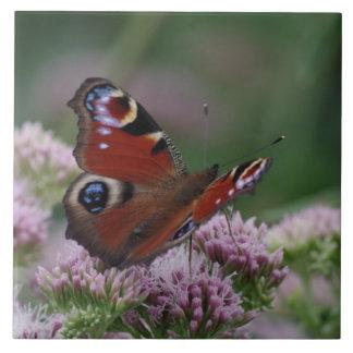 Peacock Butterfly Ceramic Tile