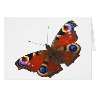 Peacock Butterfly design Card