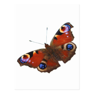 Peacock Butterfly design Postcard