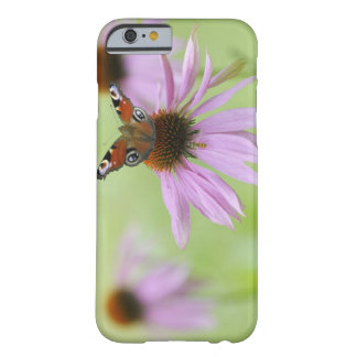 Peacock butterfly (Inachis io) drinking nectar Barely There iPhone 6 Case