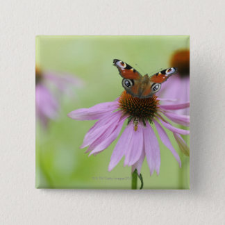 Peacock butterfly (Inachis io) drinking nectar Pinback Button