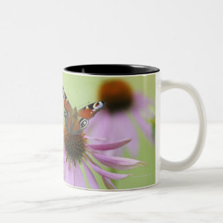 Peacock butterfly (Inachis io) drinking nectar Two-Tone Coffee Mug