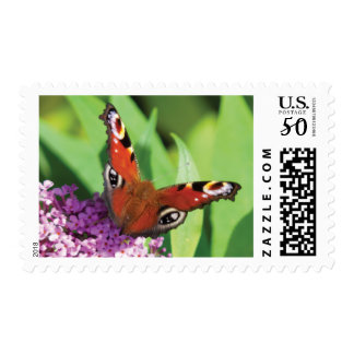 Peacock Butterfly on Buddleia Postage