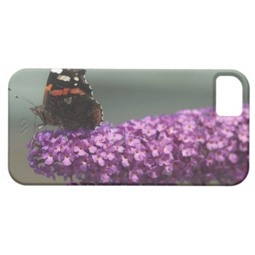 Peacock butterfly on flower iPhone SE/5/5s case
