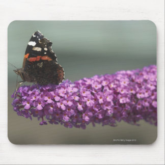 Peacock butterfly on flower mouse pad