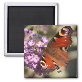 Peacock Butterfly on Summer Lilac 2 Inch Square Magnet