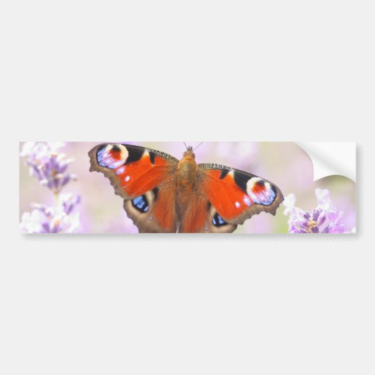 peacock butterfly over lavender bumper sticker