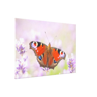 peacock butterfly over lavender canvas print