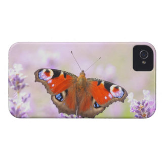 peacock butterfly over lavender Case-Mate iPhone 4 cases