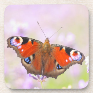 peacock butterfly over lavender drink coaster